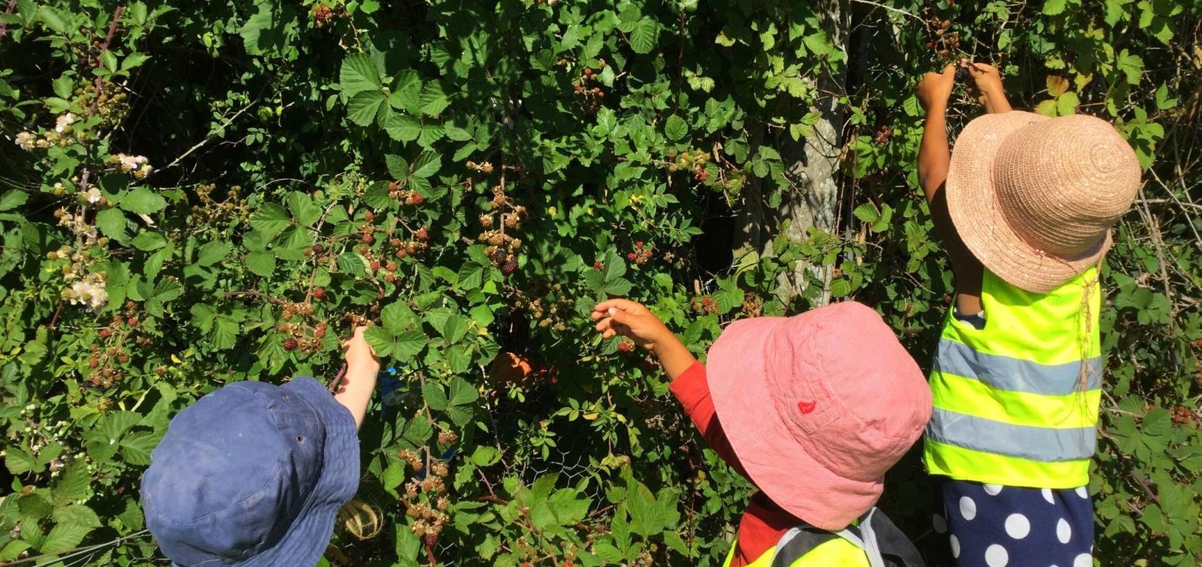 ey picking berries